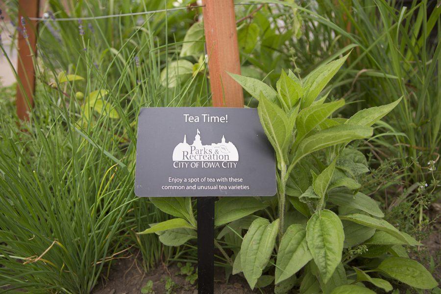 tea planters