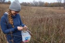 Volunteer Prairie Seed Harvest