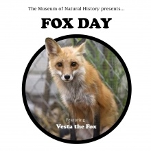 The Museum of Natural History Presents: FOX DAY!