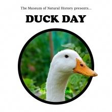 Duck Day!