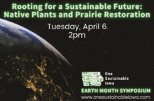 Rooting for a Sustainable Future:  Native Plants and Prairie Restoration
