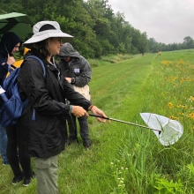 Participant uses net to catch various insects in order to determine prairie's biodiversity
