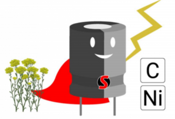 Can We Make Supercapacitors From Plants?