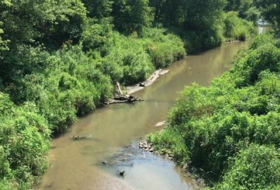 iowa stream framed by forest