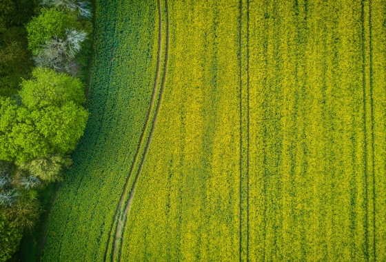aerial shot of green field