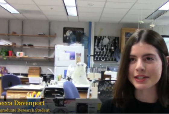 Rebecca Davenport studies bee ecolocy and citizen science in the Hendrix Lab